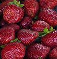 Berries up close