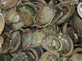 Ab shells